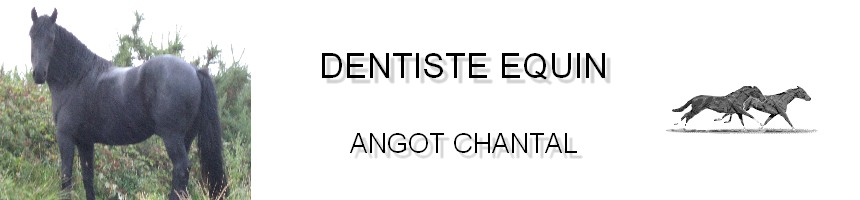 Dentiste Equin Chantal Eure Oise Manche technicien