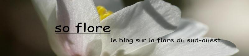 Le blog de so-flore.over-blog.com