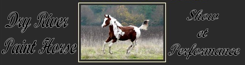 Dry River Paint Horse