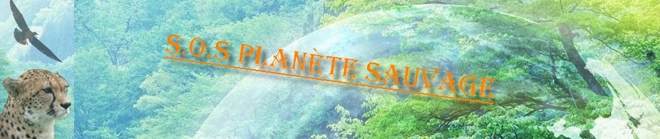 planete sauvage offre